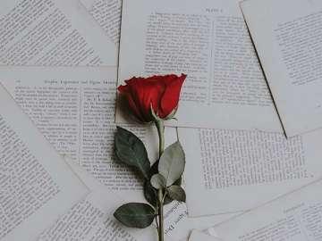 las mejores ideas para celebrar el sant jordi y el día del libro en casa