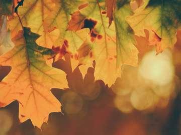 planes caseros para un otoño con covid-19